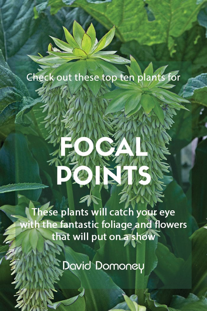 Top ten plants for focal points