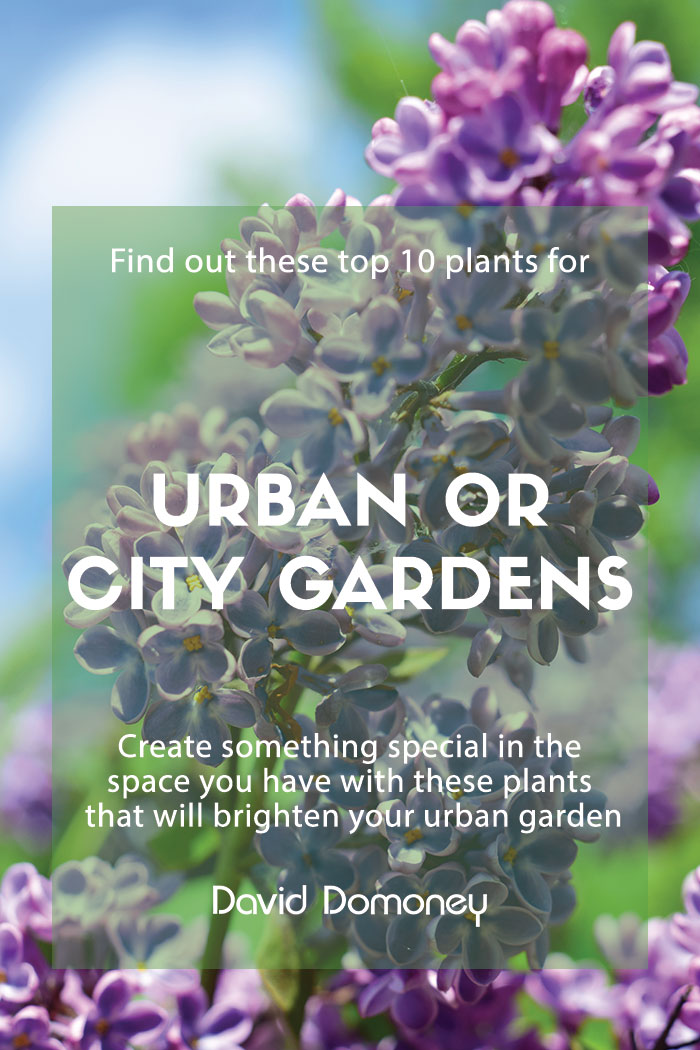 Urban or city garden plants