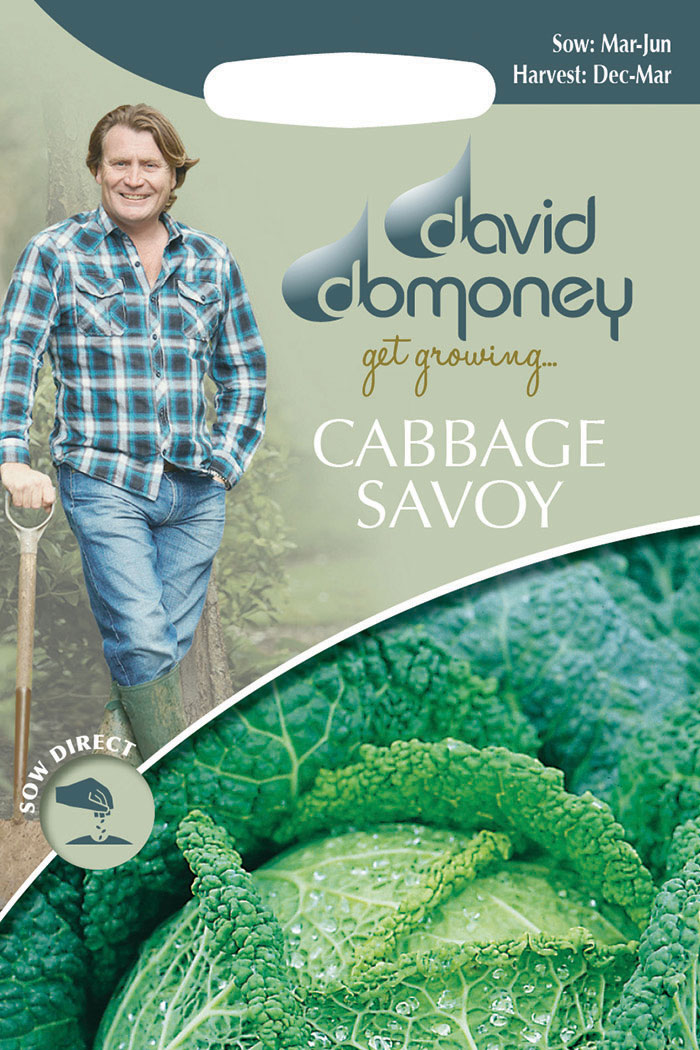 get growing cabbage savoy