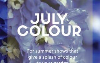 july colour plants
