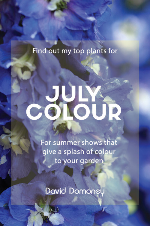 Top plants for July