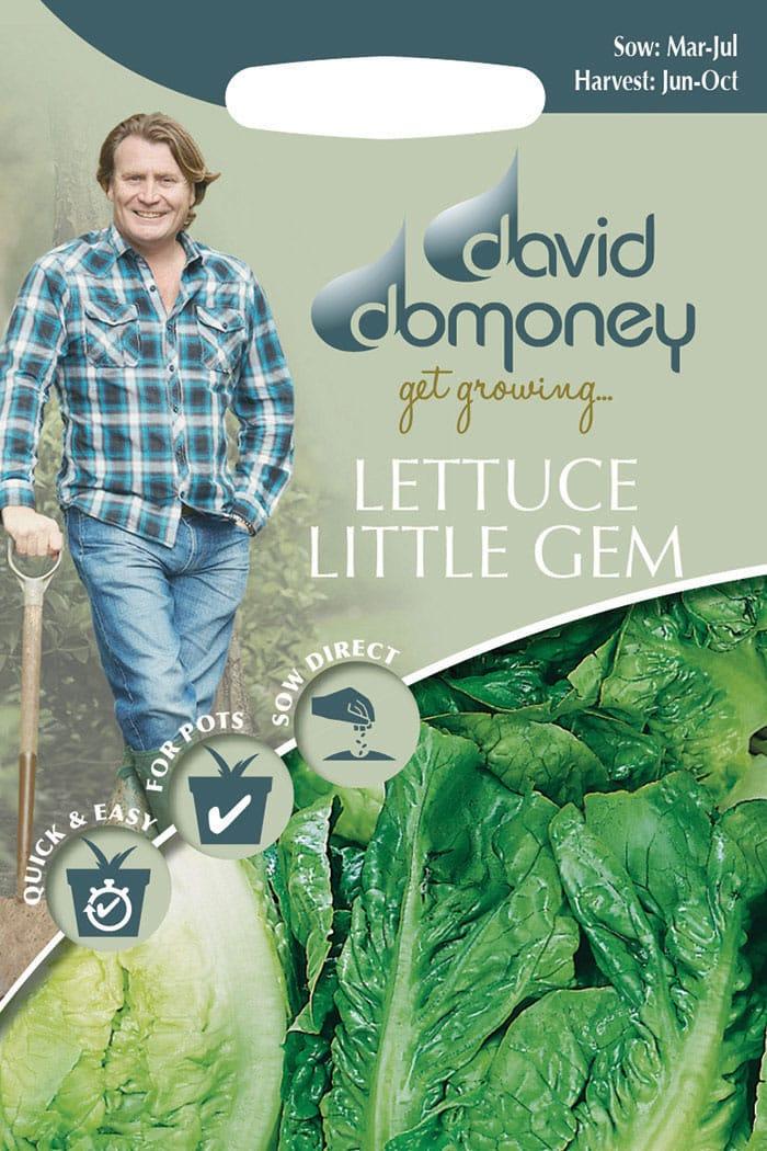get growing lettuce little gem