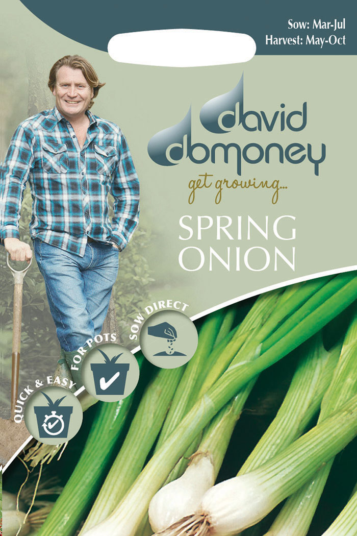 get growing spring onion