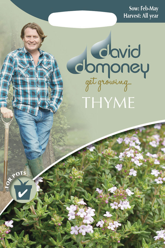 get growing thyme