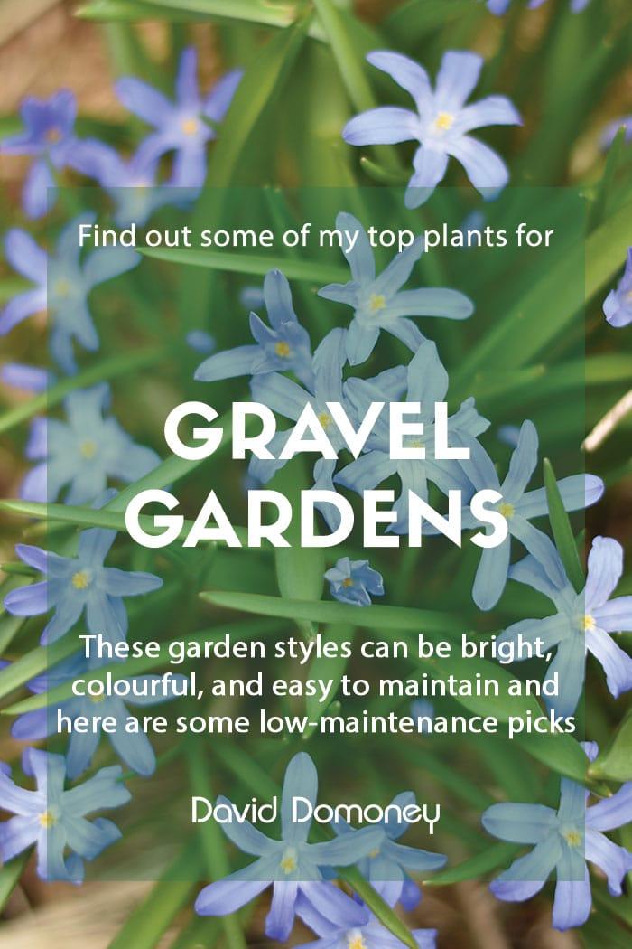 Tpo plants for gravel gardens