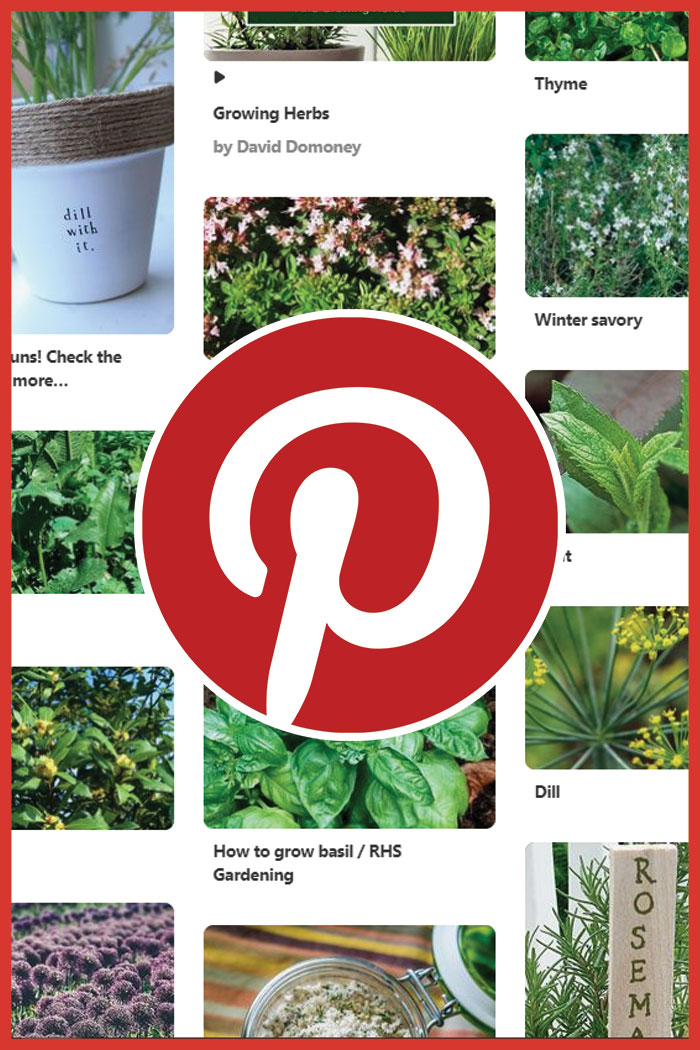 grow your own food pinterest
