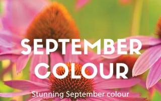September colour