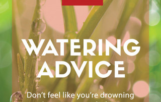 watering advice