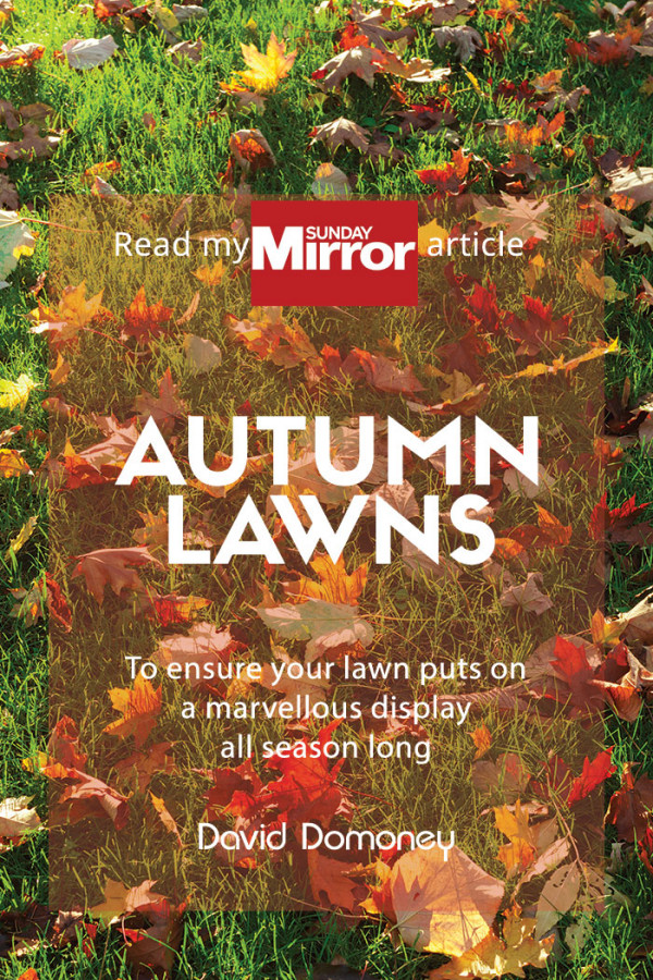 autumn lawns