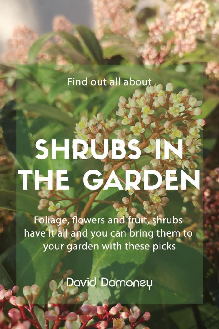 shrubs garden
