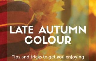 late autumn colour