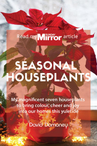 seasonal houseplants