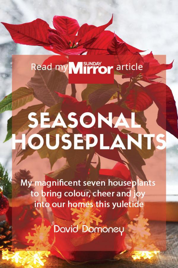 seasonal houseplants