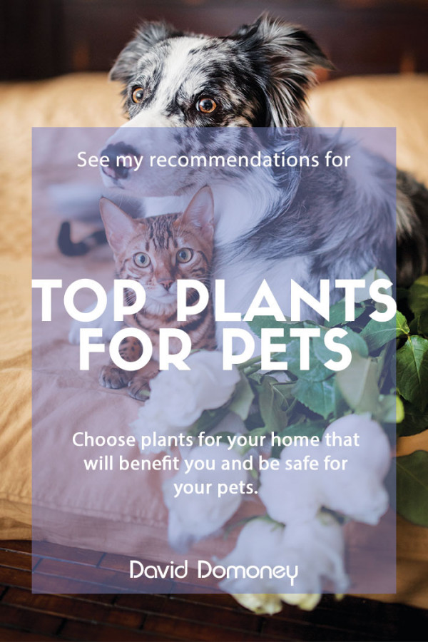 Plants for pets