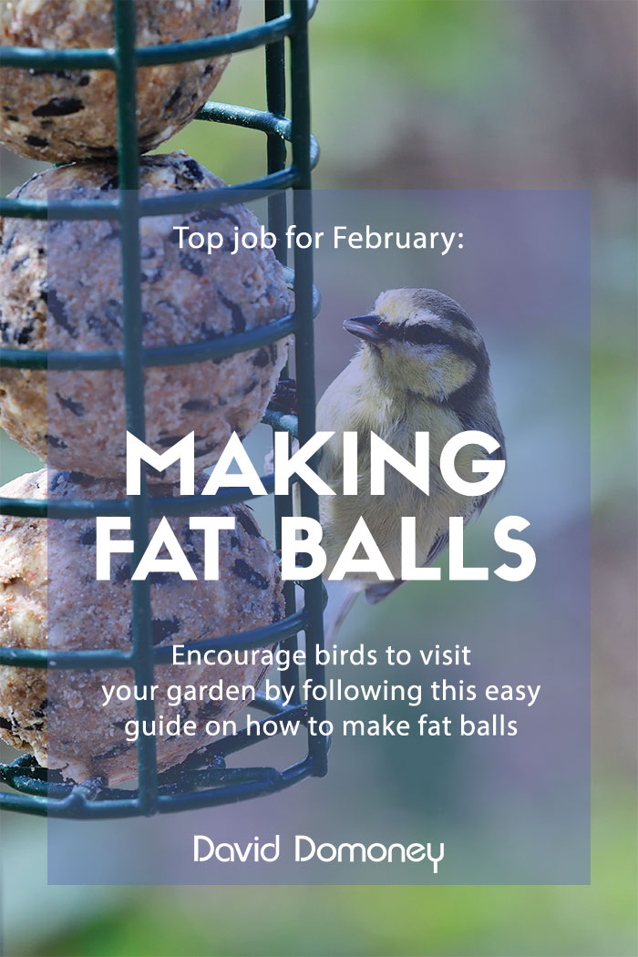 Making fat balls for birds