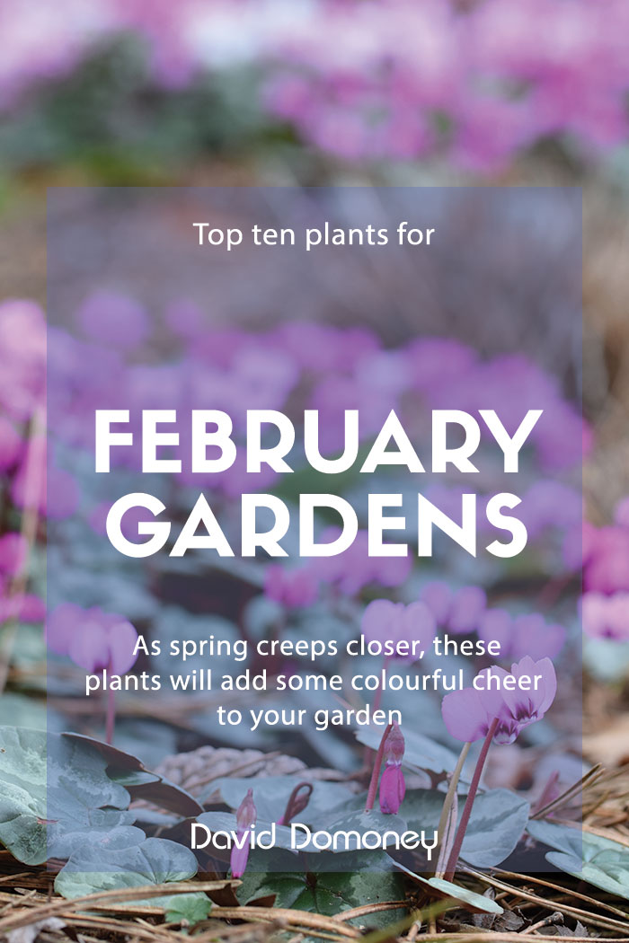 Top plants for February gardens
