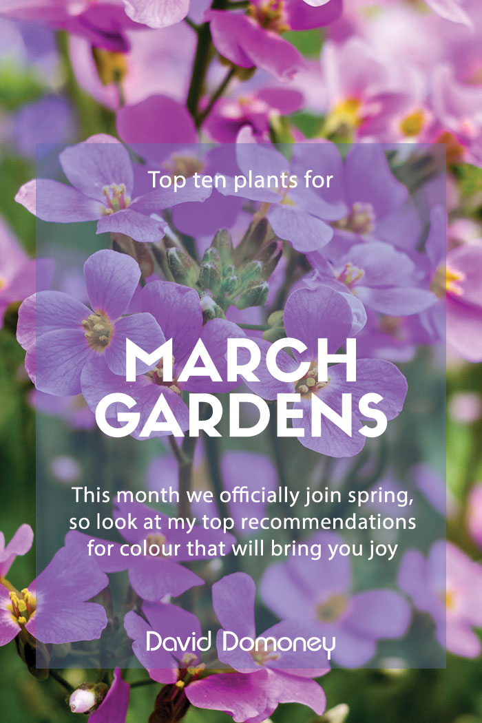 Top plants march