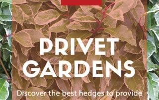 privet gardens