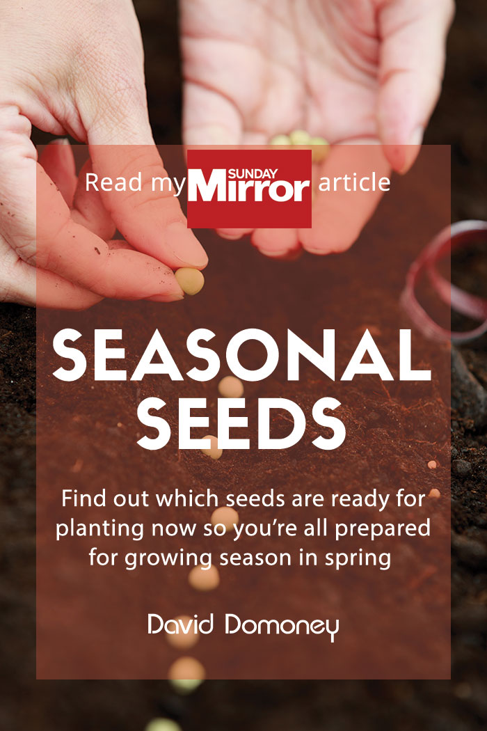 Sunday Mirror Seasonal seeds