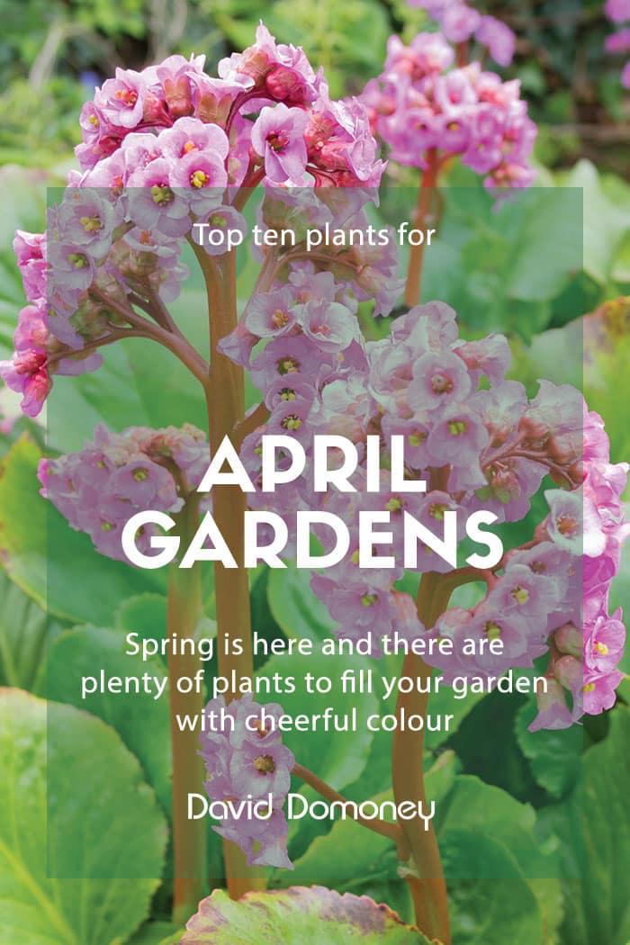 Top Ten Plants April