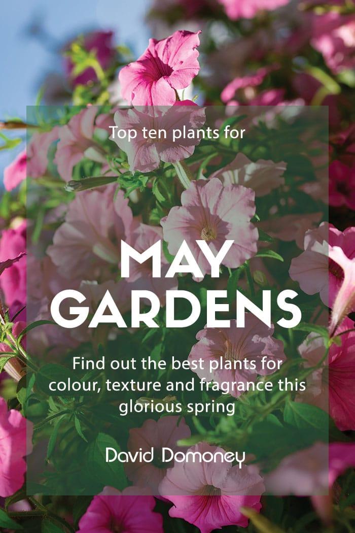 top ten plants may