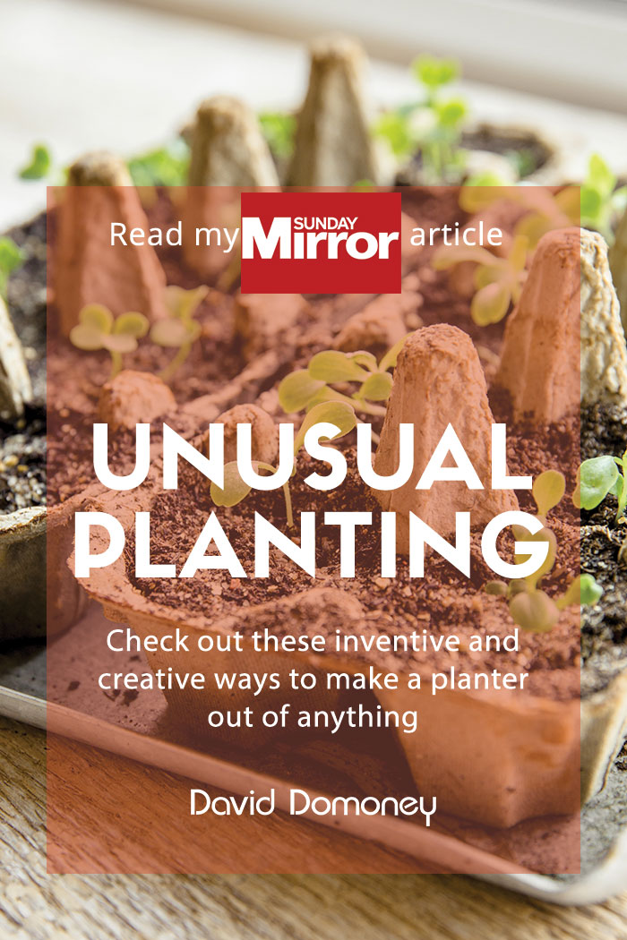 sunday mirror unusual planting