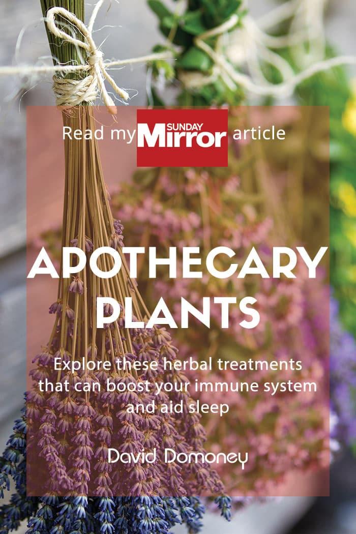 apothecary plants