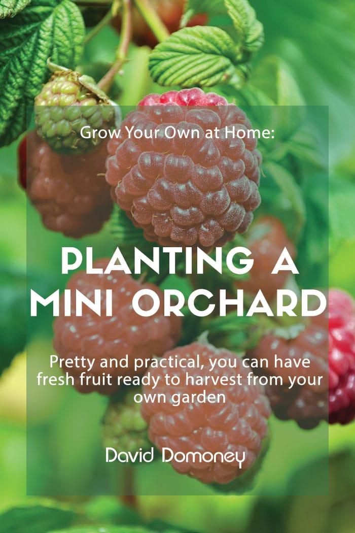 planting mini orchard