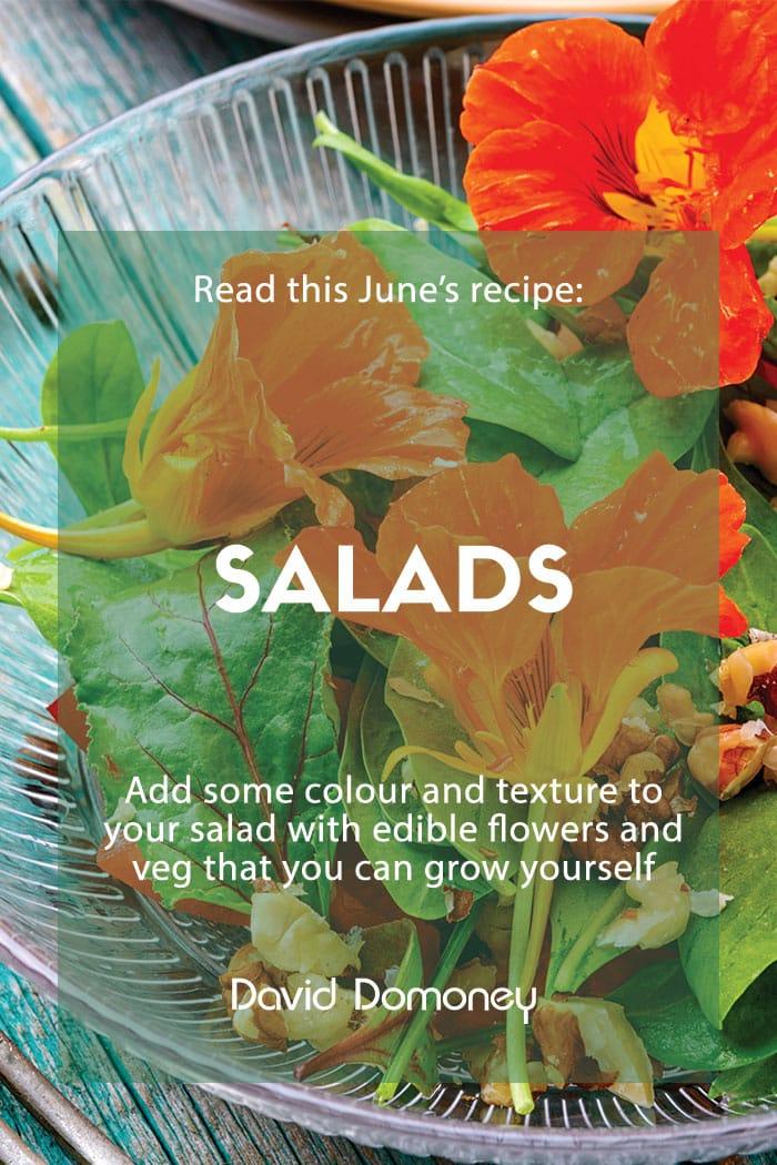 gyo salad