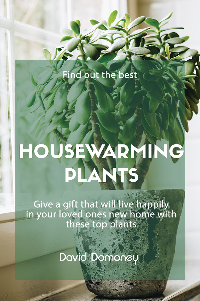housewarming plants gift