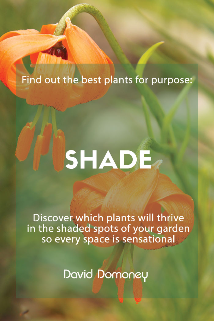 plants for purpose shade