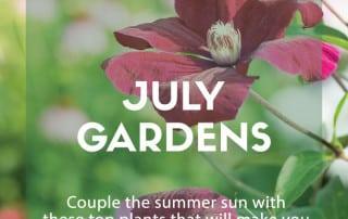 Top plants July