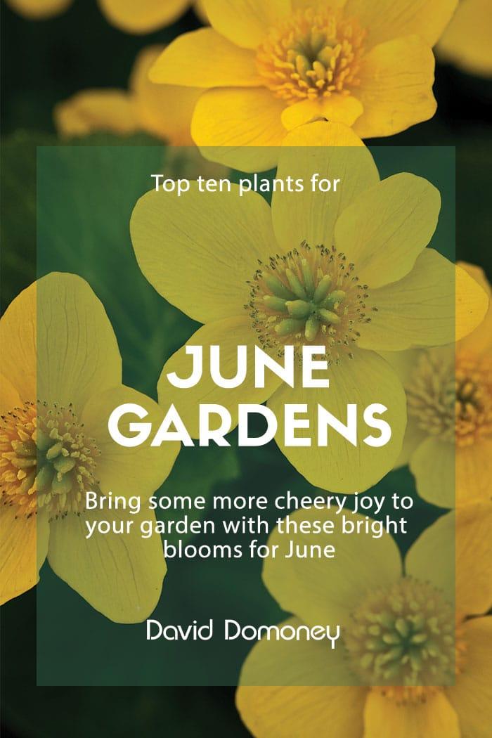 top plants june