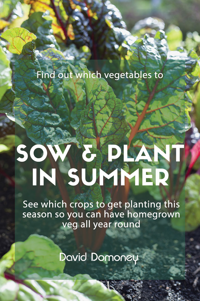 What to sow and plant in summer