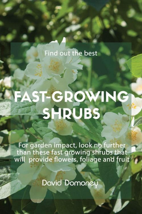 fast growing shrubs