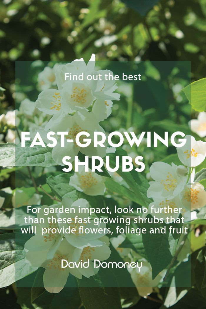 fast growing shrubs