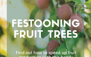 Festooning fruit trees