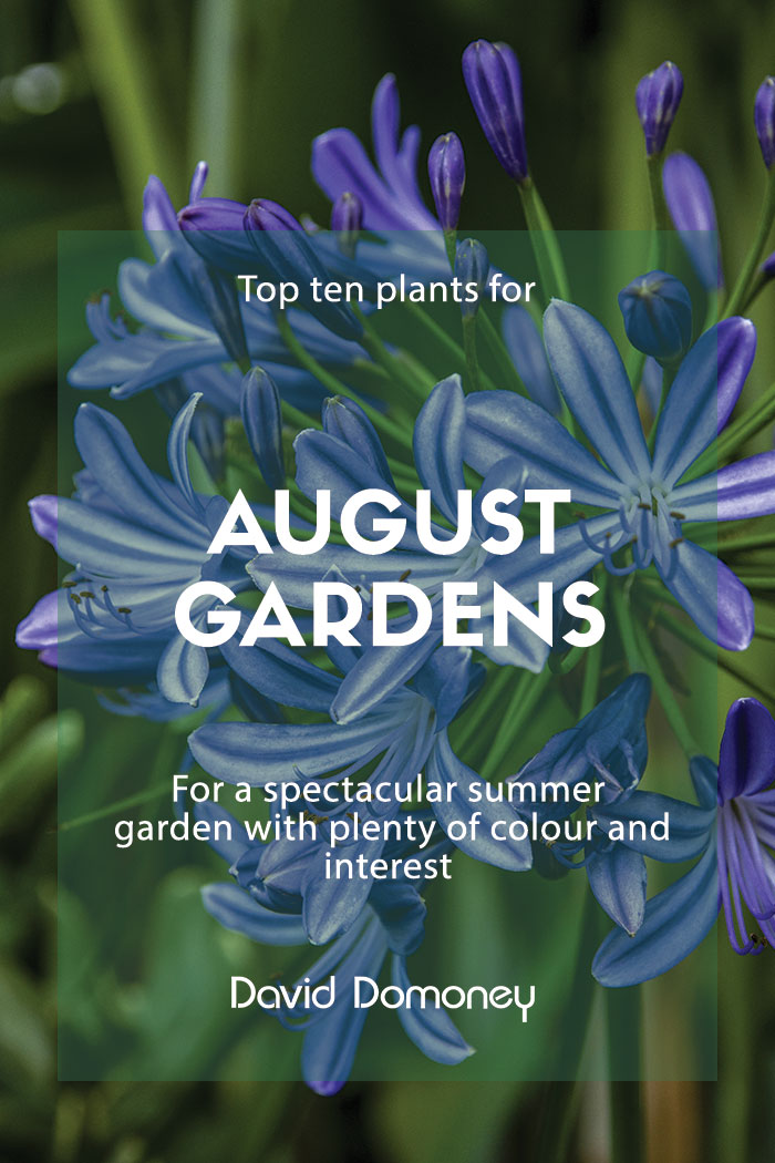 top plants august