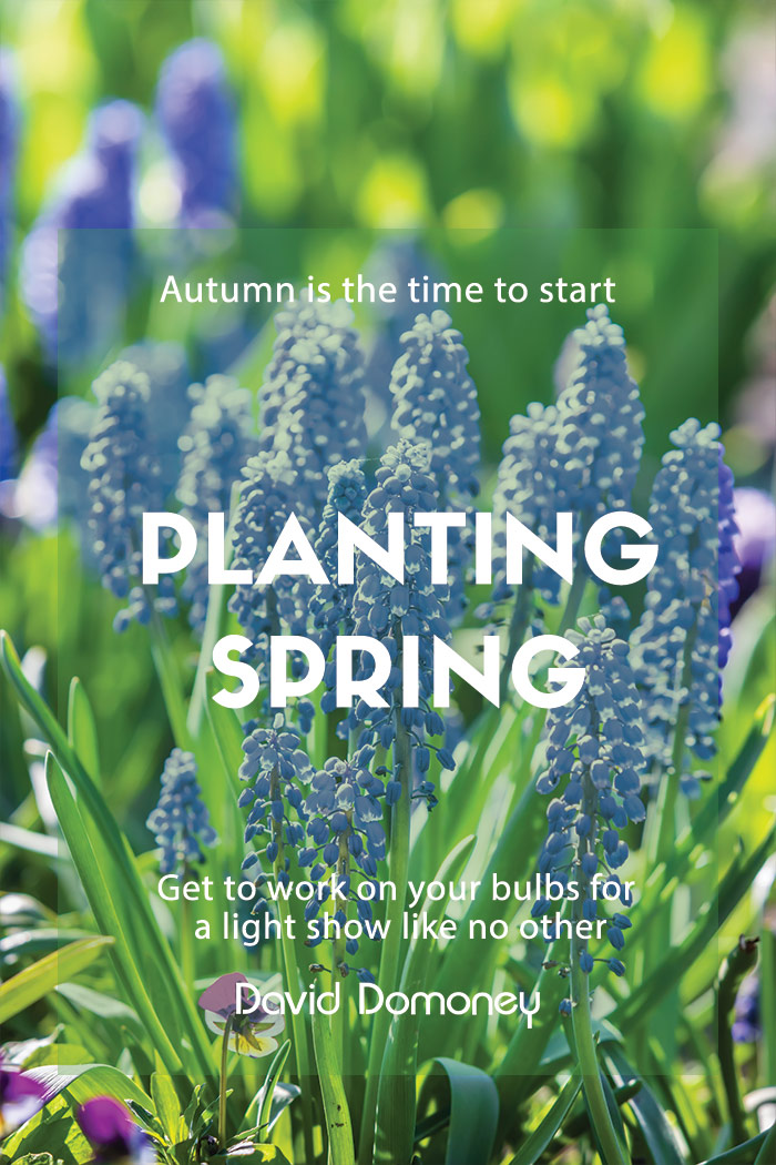 autumn planting bulbs