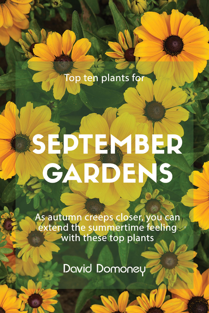 Top ten plants September