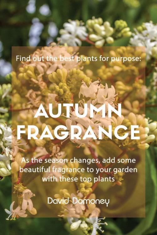 autumn fragrance
