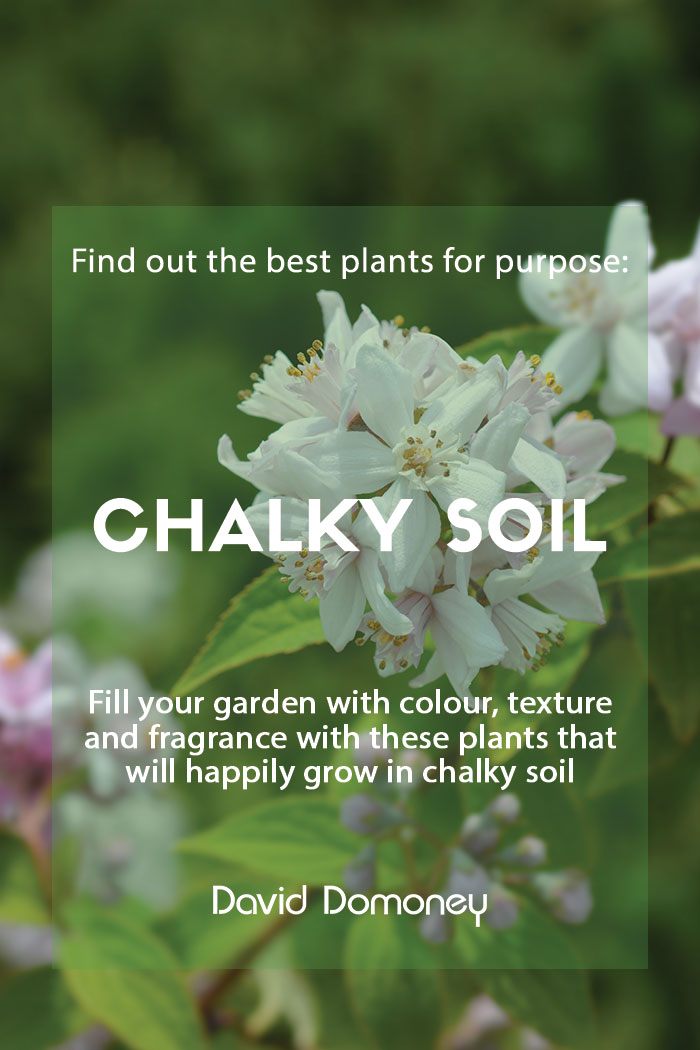plants chalky soil