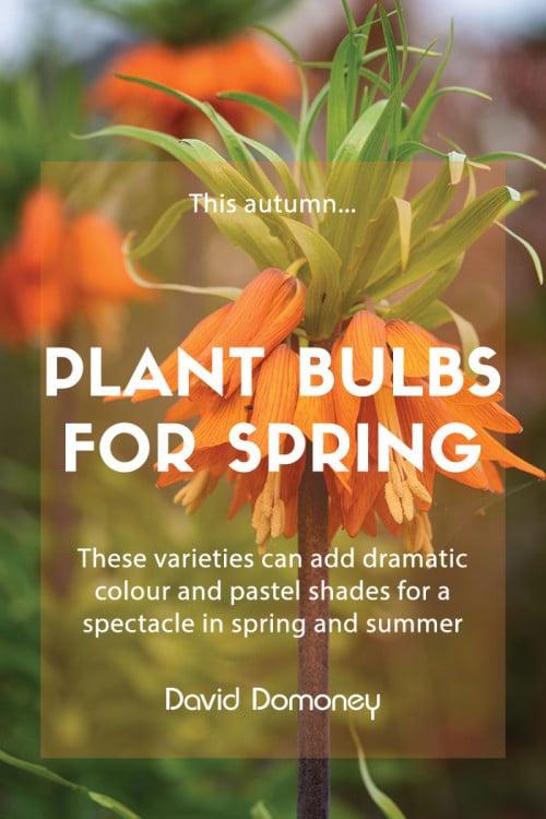 plant bulbs autumn