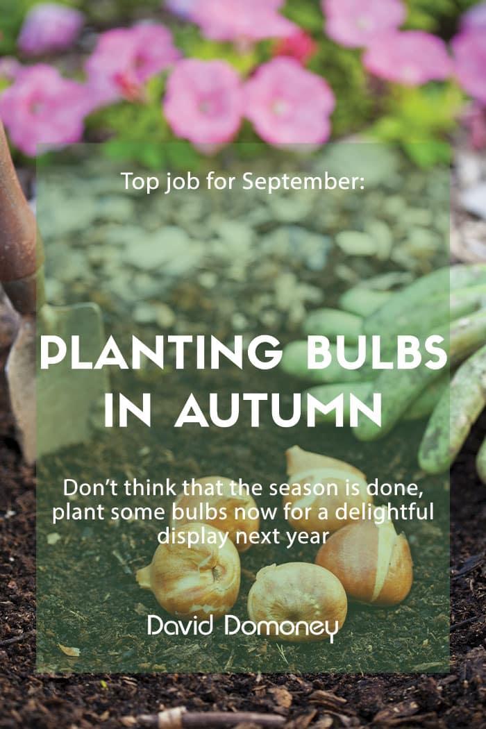 planting bulbs autumn