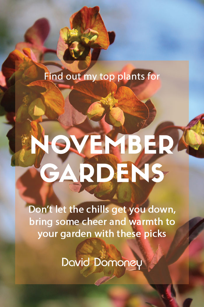 top ten plants for november