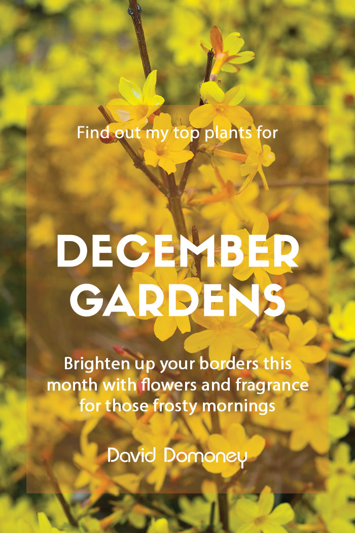 December plants gardens