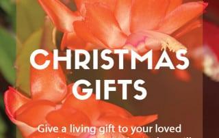 Plants as Christmas gifts