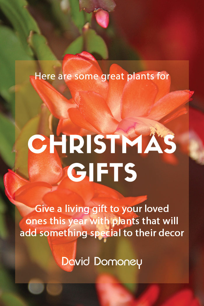 Plants as Christmas gifts