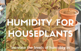 Top job for December: Increasing humidity for houseplants