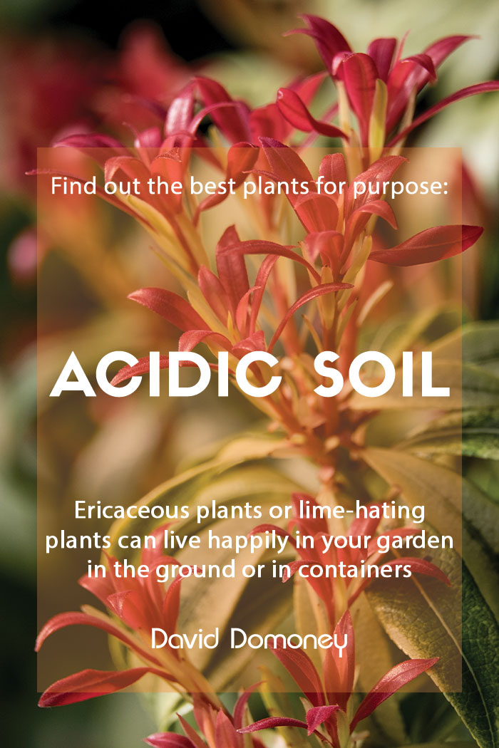 Plants for purpose plants for acidic soil